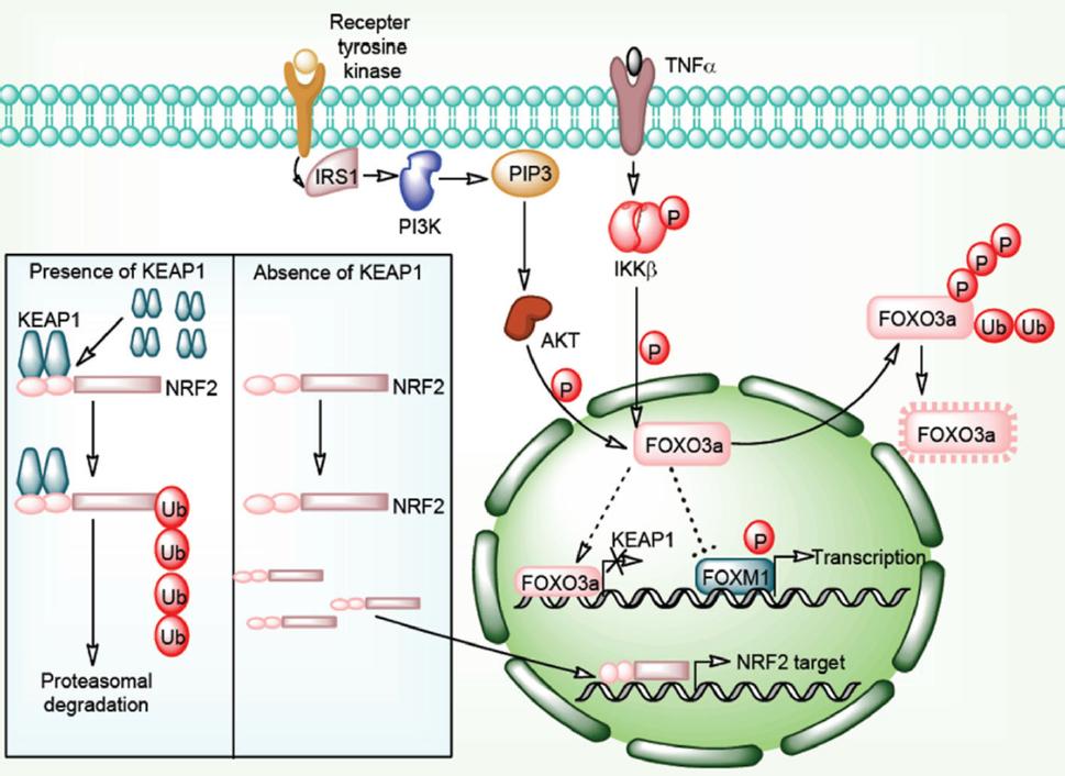 Emerging targets in cancer drug resistance