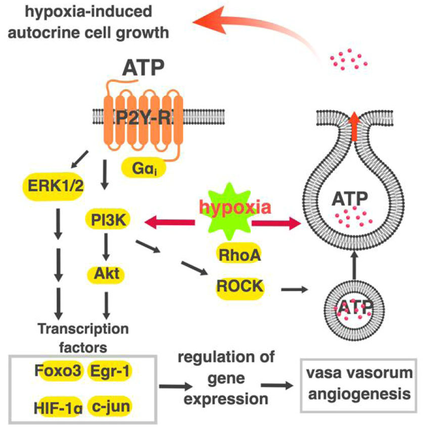 A current view of G protein-coupled receptor - mediated