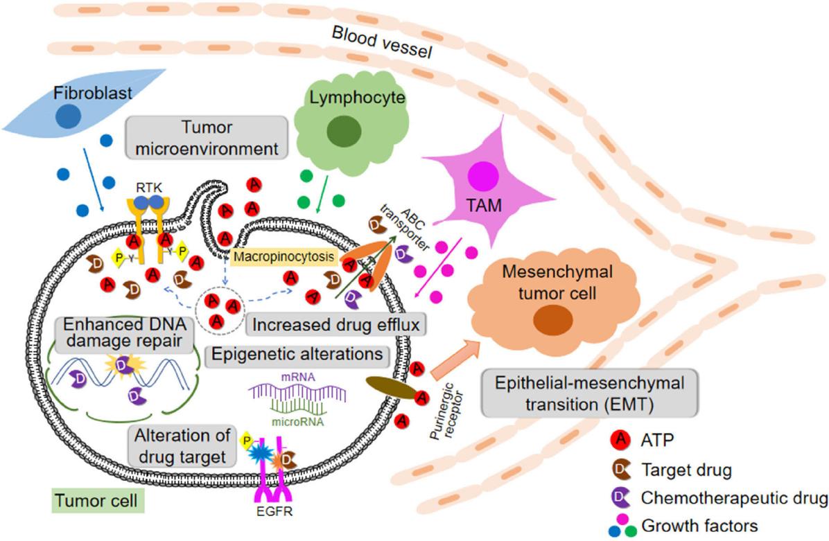Drug Resistance And Combating Drug Resistance In Cancer