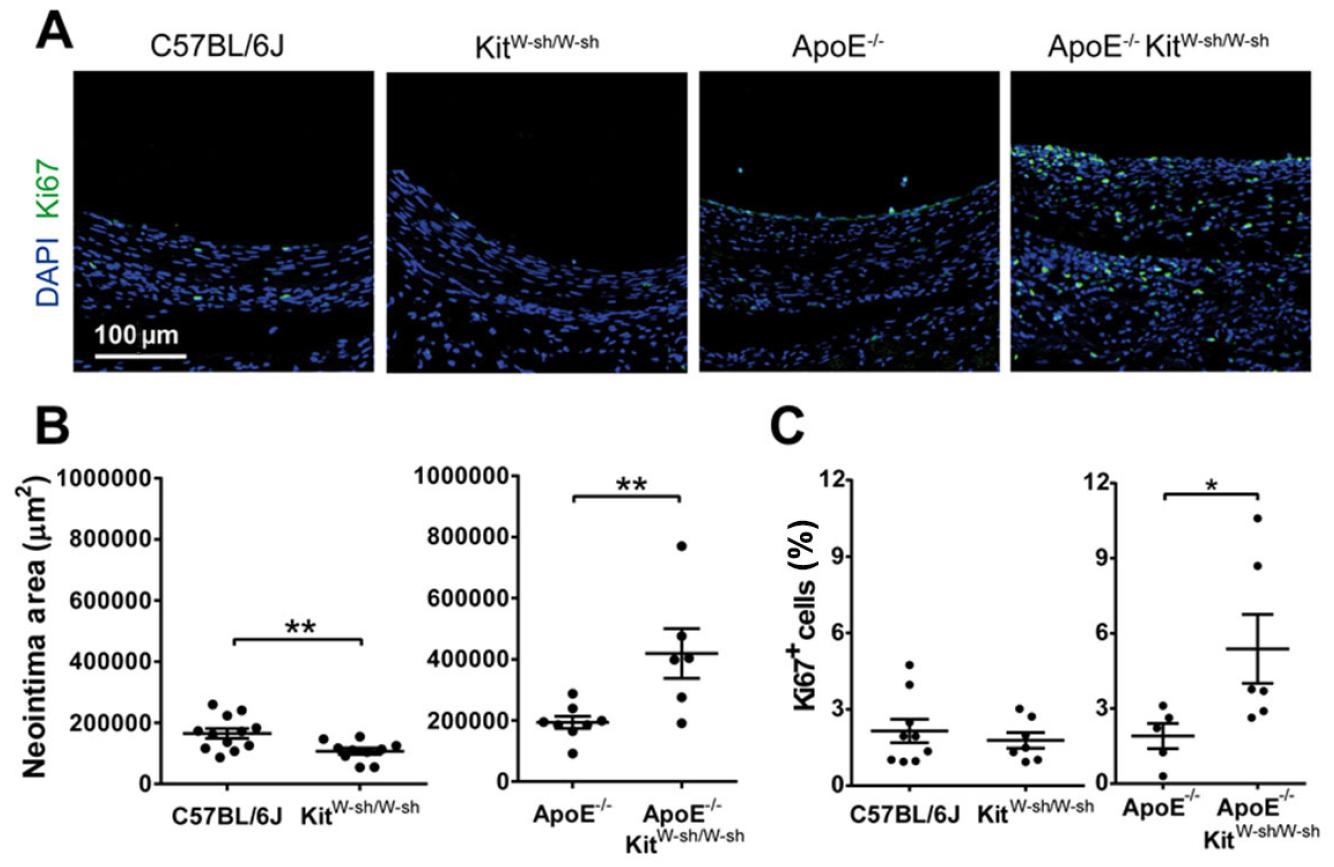 Perivascular mast cells promote neointimal elastin