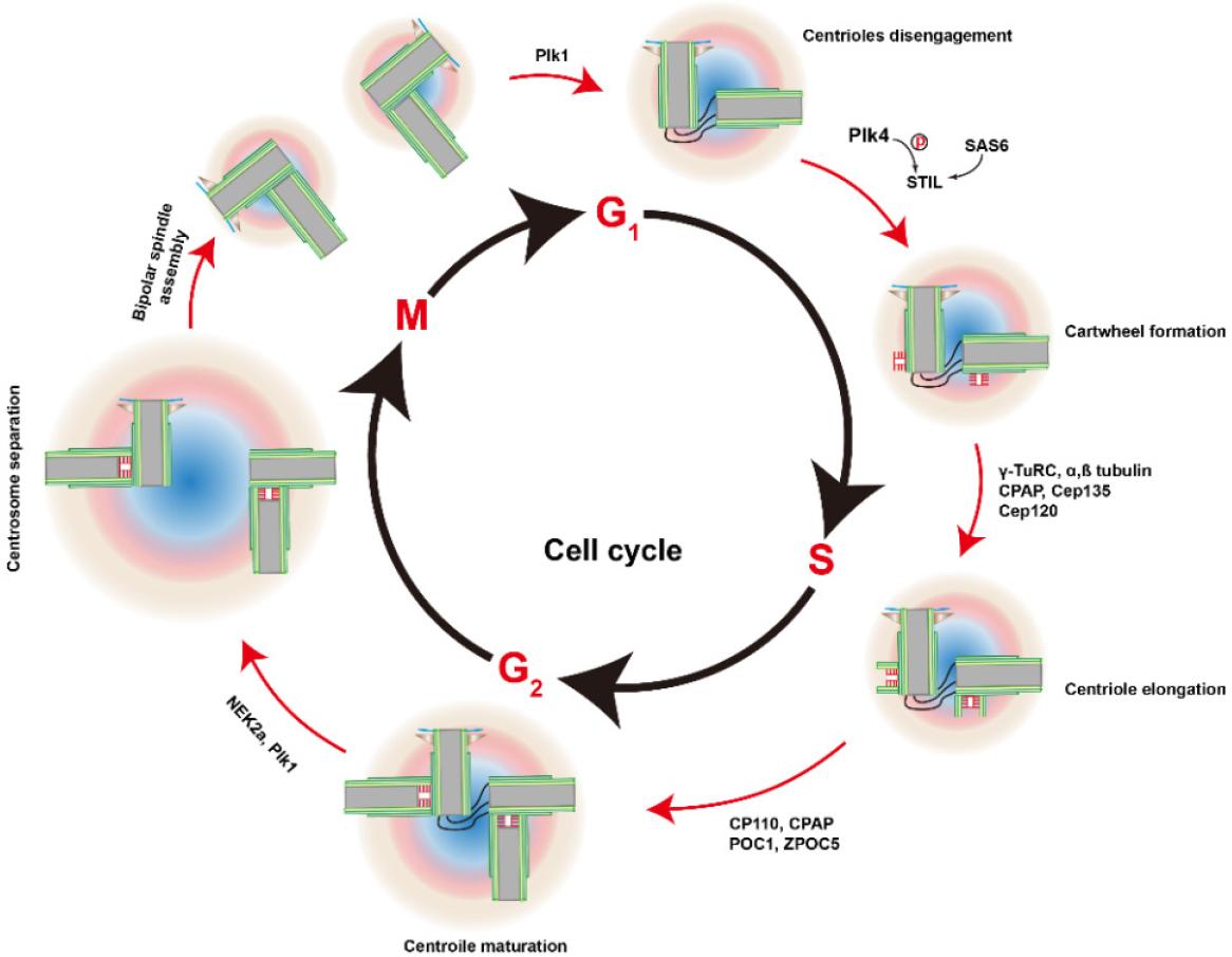 Overcome cancer drug resistance by targeting epigenetic
