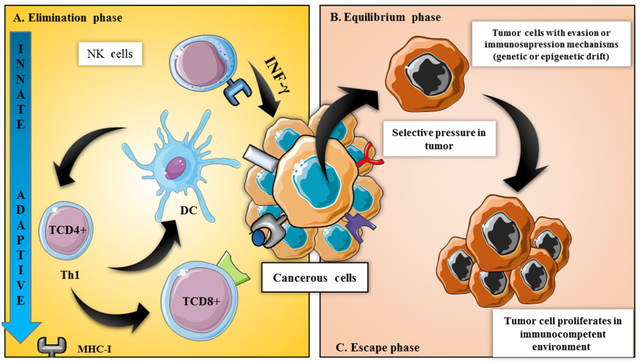 Bacteria in cancer therapy: beyond immunostimulation