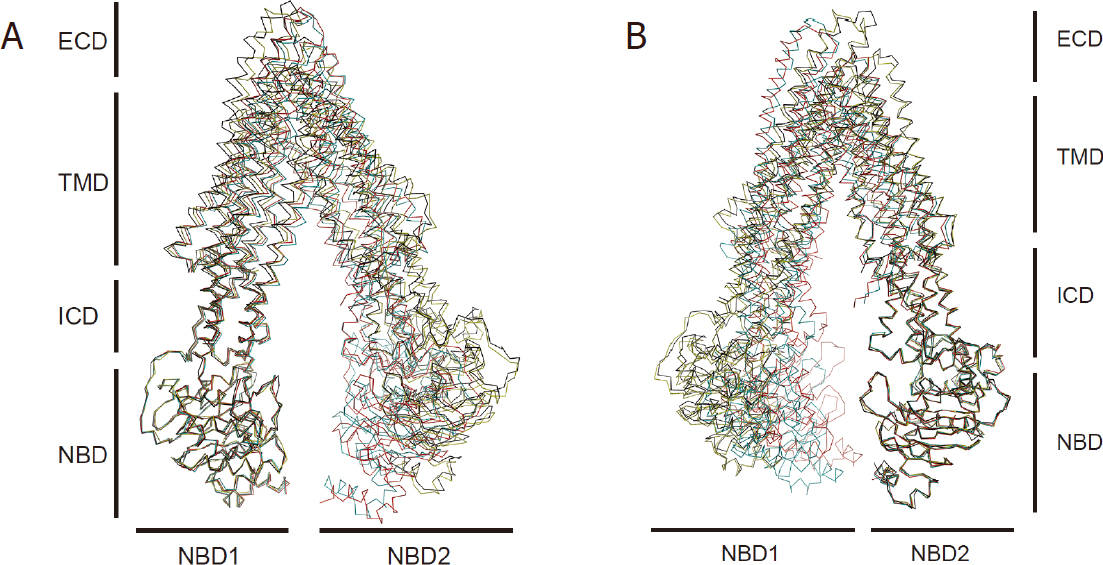 Emerging consensus on the mechanism of polyspecific