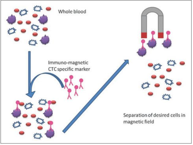 Role of circulating tumor cells in future diagnosis and