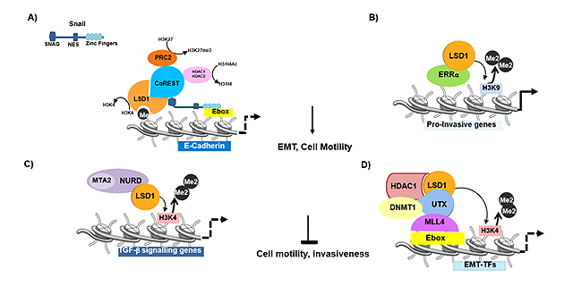 Journal of Cancer Metastasis and Treatment