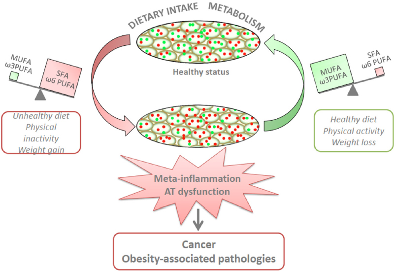 Dietary Fatty Acids And Adipose Tissue Inflammation At The Crossroad Between Obesity And Colorectal Cancer