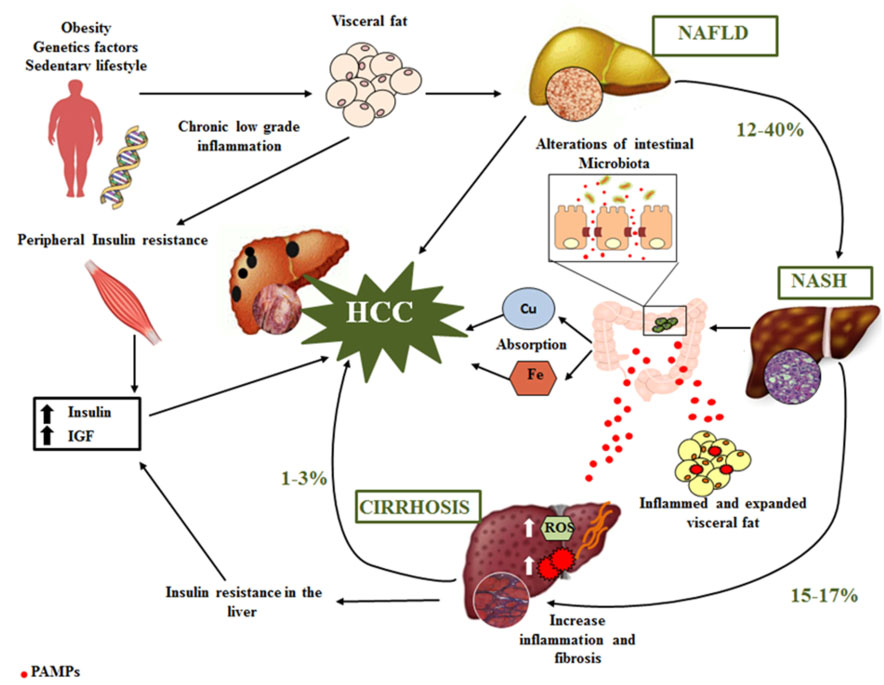 hepatoma research