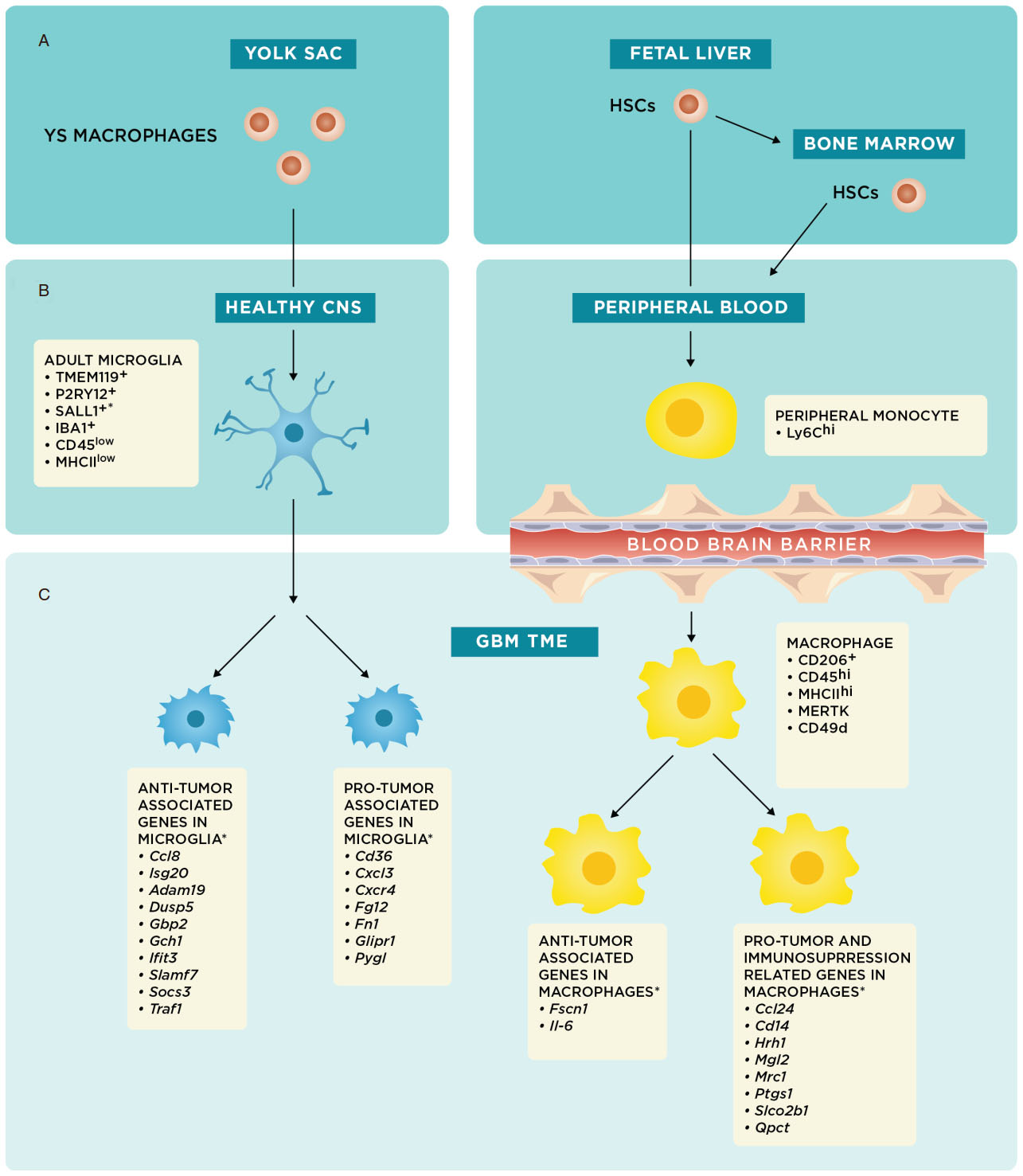 It takes two: potential therapies and insights involving