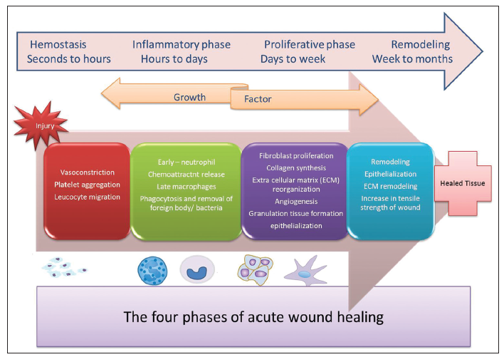 Current concepts in the physiology of adult wound healing