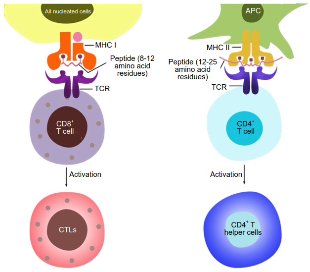 A primer on recent developments in cancer immunotherapy